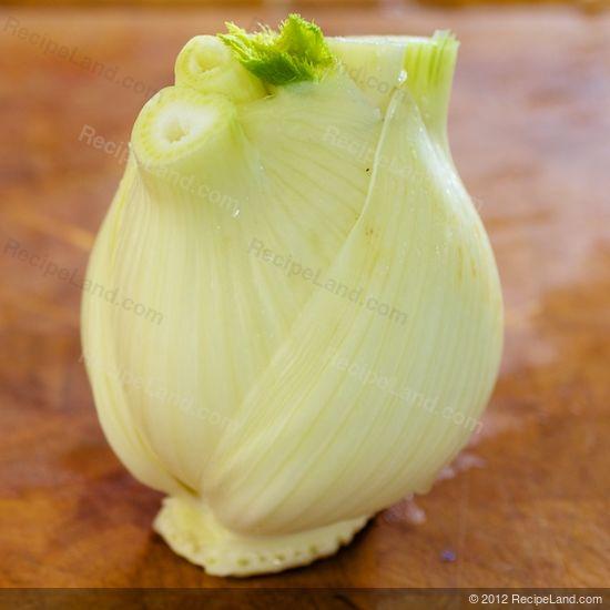 fennel bulb