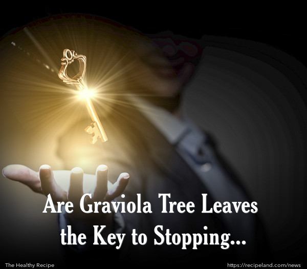 Are Graviola Tree Leaves the Key to Stopping Cancer?