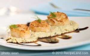 Scallops on Fennel Puree with Honey Balsamic Drizzle