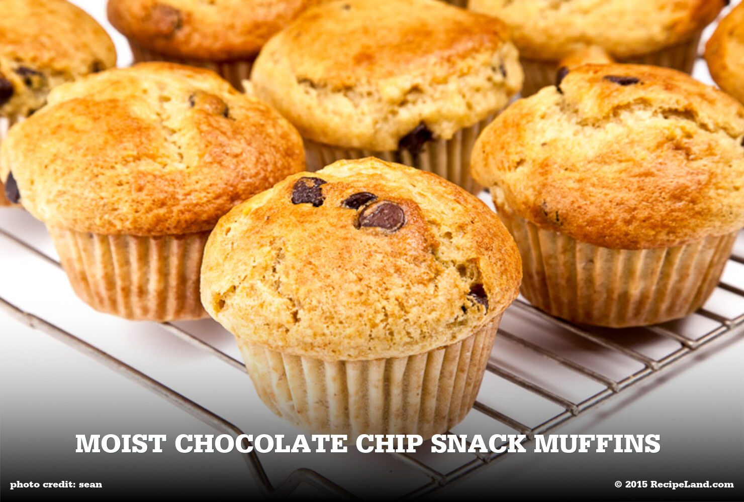 Moist Chocolate Chip Snack Muffins