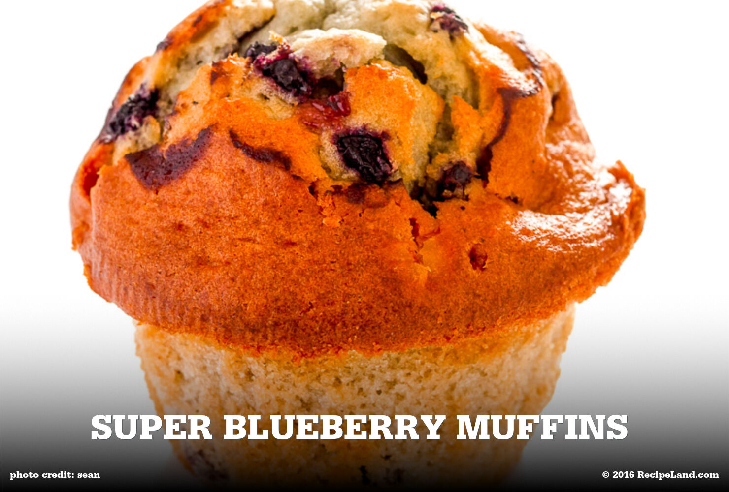 Super Blueberry Muffins