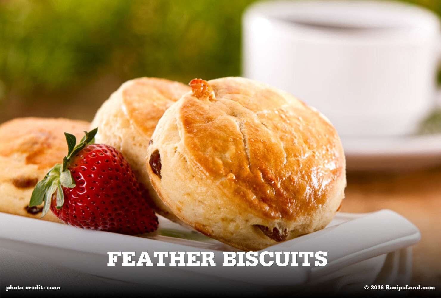 Feather Biscuits
