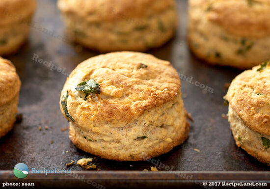 Flaky light as a feather basil parmesan scones - fresh out of the oven