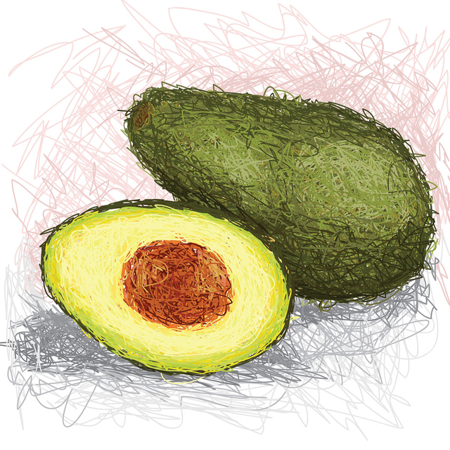 Illustration of an avocado