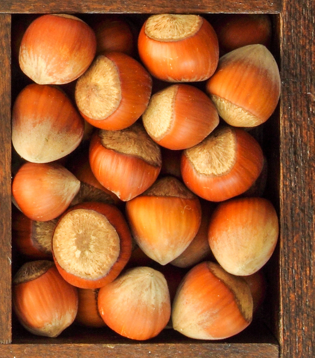 hazelnuts in their shell